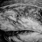 From the Dark... A Shark! by LisaBuchfink