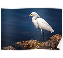 Snowy Egret at Ding Darling Poster