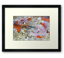 Janss' Pipefish over coral Framed Print
