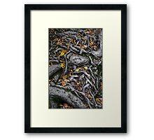 Ricketts Glen Number Five Framed Print