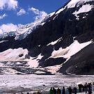 Columbian Icefields by Maureen Clark