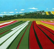 Tulip Farm, Table Cape by Richard Klekociuk