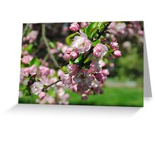 Pink Cherry Blossom In Full Bloom Greeting Card