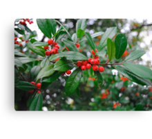 Beautiful Holly Tree with Berries Canvas Print