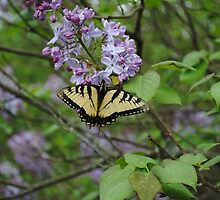 Monarch Butterfly on Lilac by Suleyman Anadol