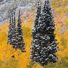 Autumn Pines by David Kocherhans