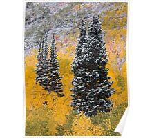 Autumn Pines Poster
