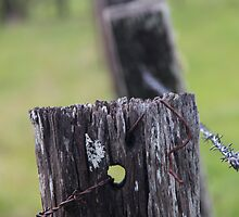 Fence Posts by Carolyn Boyden