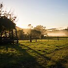 Morning Rays at Crystal Creek Farm by Carolyn Boyden