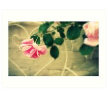 Pink Roses in Walled Garden Art Print