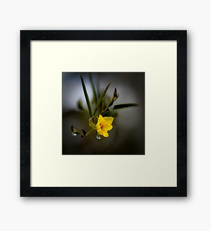 Native Flower Unknown Framed Print