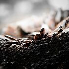 Burnt Grass Tree Stump by dioptrewho