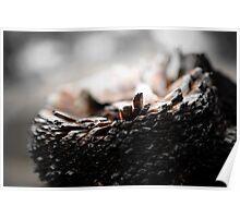 Burnt Grass Tree Stump Poster