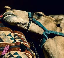 This Camel like it´s hump by dslrtricks