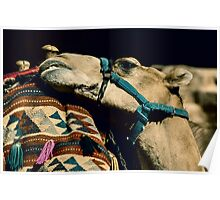 This Camel like it´s hump Poster