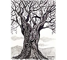 'GNARLY OLD TREE'  Photographic Print