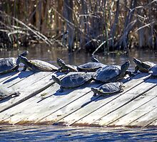 The Turtle Raft by Mikell Herrick