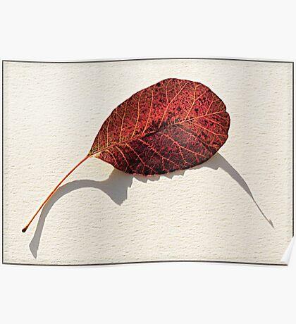 Leaf Shadow Poster