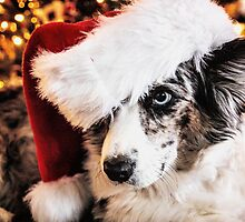 Christmas Cardigan by Cathy Donohoue