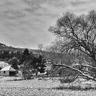 Winter BW by Adrian Harvey