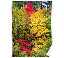 Autumn colours-3 Poster
