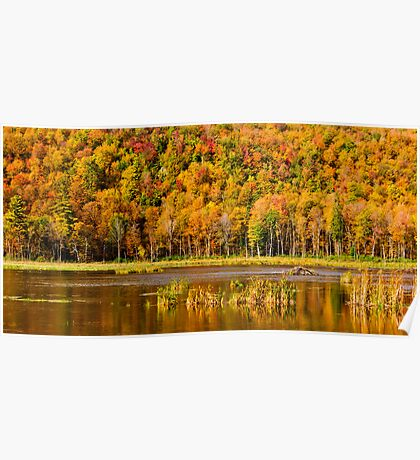 Autumn pond Poster