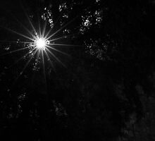Sunstar shining by barrylee