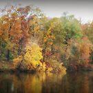 Autumn Reflections by Ginger  Barritt
