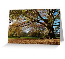 Copper Beech in the Park Greeting Card
