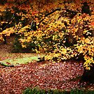 Autumn Tree by Ginger  Barritt
