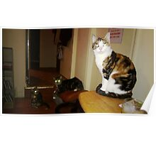 MOIRE, Mickey, & coco kitty (from kitty city) r to l Poster