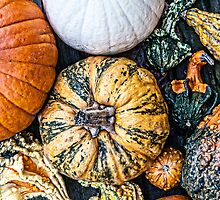 Oh My Gourd! by Jessica Manelis