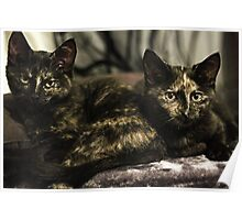 Nebula & Soli the tortie cats #1 Poster
