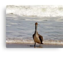 Pelican Artistic Photograph by Shannon Sears Canvas Print