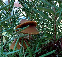 Mushroom Forest by ValSteve59