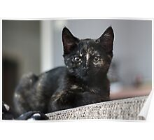 Nebula the tortie cat #1 Poster