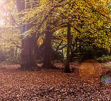 Hampstead Heath Clearing by copacic