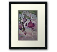 Watercolour: Fuchsia Buds Magenta Framed Print