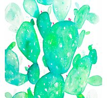 Green Watercolour Cactus Photographic Print