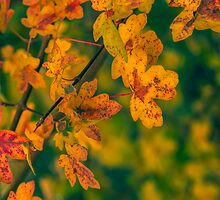 Autumn Colours by StephenRphoto