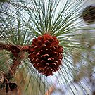 Hanging  Pine Cone by Cynthia48