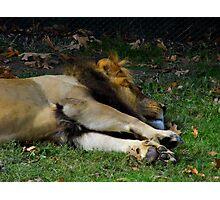 The Lion Sleeps Tonight Photographic Print