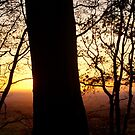 Looking East at Low Winter Sun from Hembury Fort by Mike  Waldron