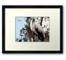 Watchful Artistic Photograph by Shannon Sears Framed Print