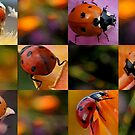 Ladybug Checkerboard by Betsy  Seeton