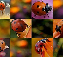 Ladybug Checkerboard by Betsy  Seeton