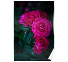Minature Roses Poster