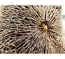 sea sponge Photographic Print