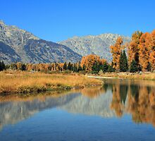 Schwabacher in Fall by Ann  Van Breemen