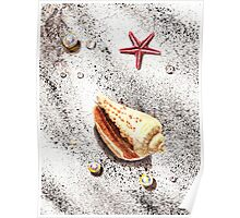 Seashell, Star, Pears, and Water Drops Still Life Poster